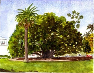 """Balboa Fig Tree"""